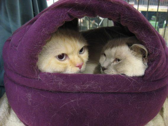 Tevreden kattenklantjes in een Duo-mand!