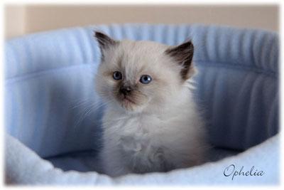 Kitten in een babyblauwe fleecemand van Happy Cats