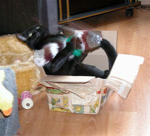 Hagar heerlijk aan het spelen met de staartmuis!