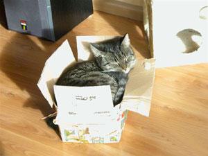Iwan ligt te genieten in de doos waar alle 'cadeautjes' in hebben gezeten