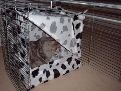 Tentje voor in de showkooi of kittenkooi!  Prijs op aanvraag